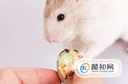 怎么确定仓鼠吃饱了 为什么一直吃也不会撑死