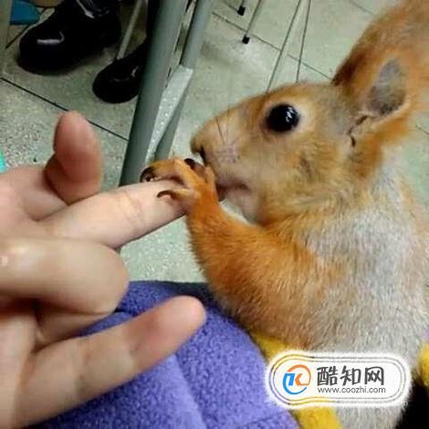 雪地松鼠和魔王松鼠有什么區別