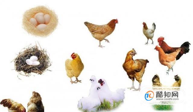 先有雞還是先有蛋