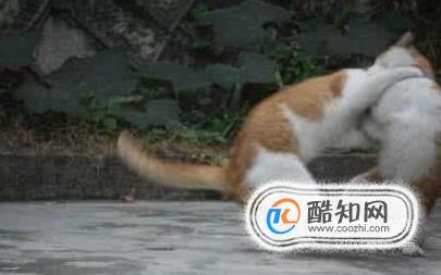 处理猫猫打架的方法