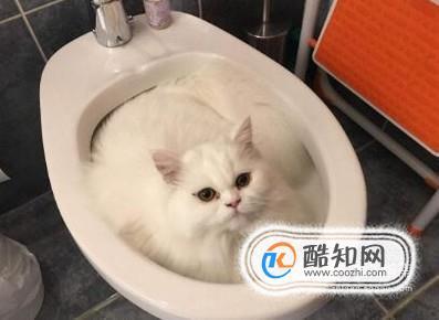 怎么训练小猫上厕所