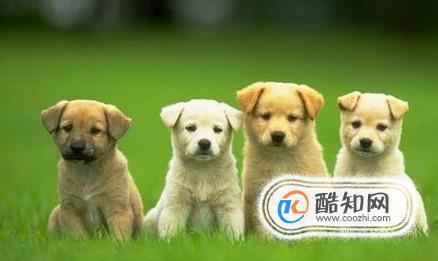 夏天狗狗吃什么好?天热狗狗喂养注意事项