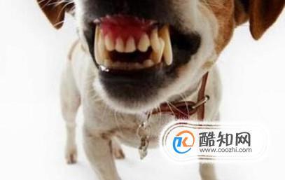 宠物狗咬主人该怎么办