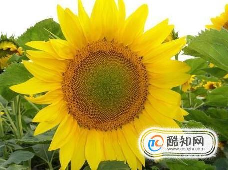 秋季适合种植什么植物?
