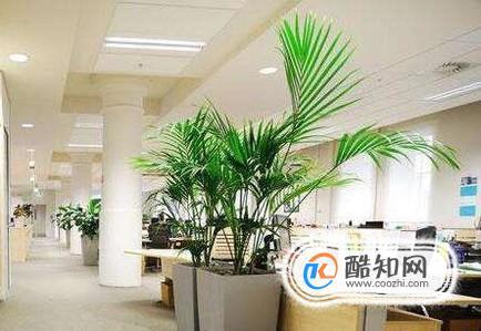 适合放办公室的植物,办公室放什么植物好?