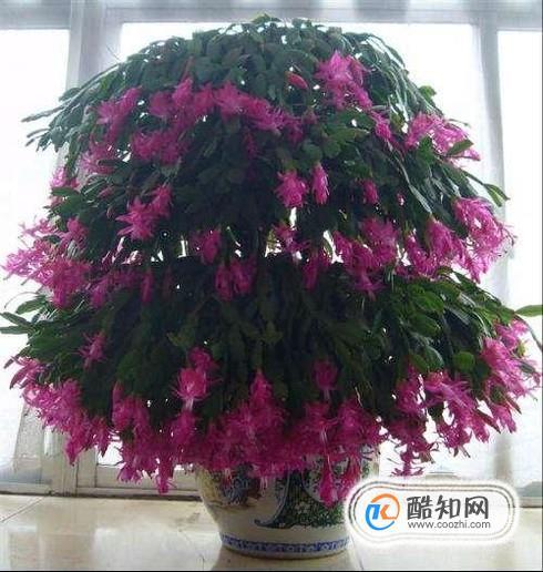 几种适合室内养殖的花卉