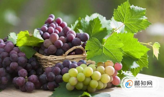 葡萄的作用功效营养价值