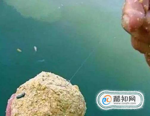 釣鯽魚如何打窩?