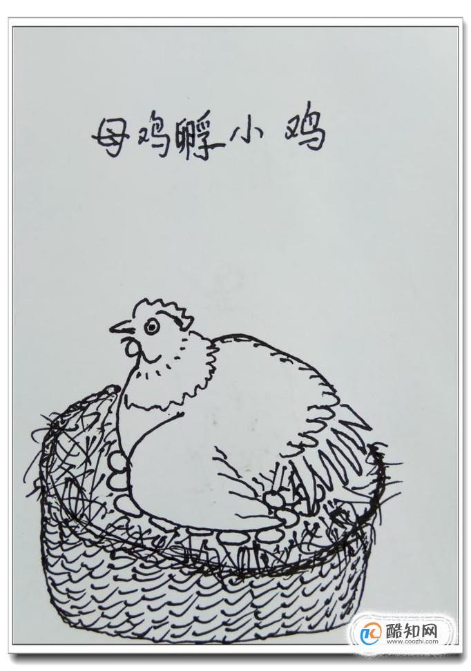 """怎样用钢笔画""""母鸡孵小鸡""""?"""