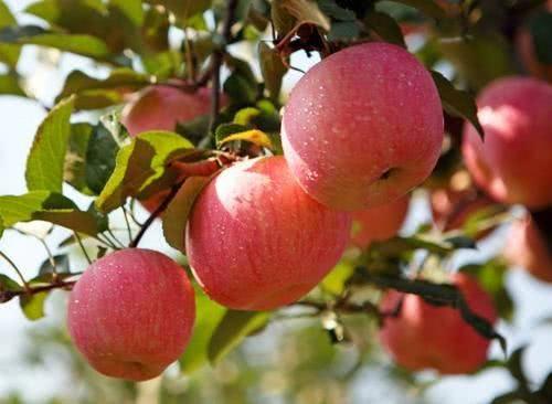 多吃哪些水果对身体好?
