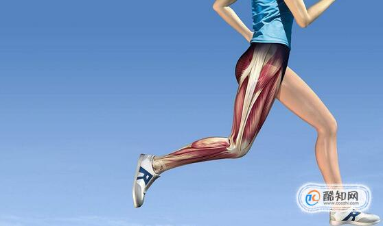 練腿部肌肉要注意什么,腿部肌肉多久能練出來