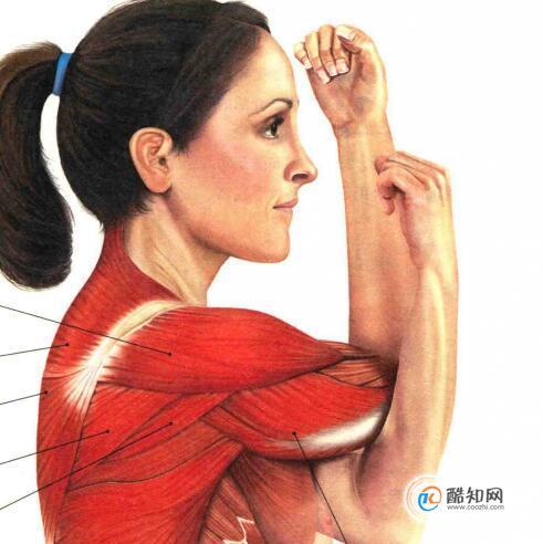 肩部肌肉拉伸動作圖解,拉伸肩部肌肉的注意事項