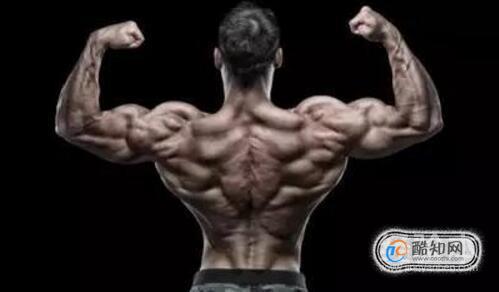 背阔肌和肱二头肌的锻炼方法,背阔肌和肱二头肌几天练一次