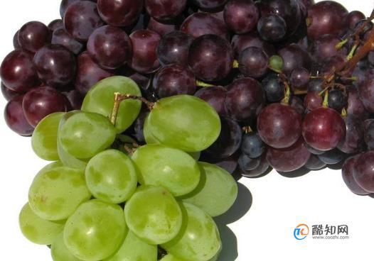 哪些食物最适合缺铁性贫血的人群食用?