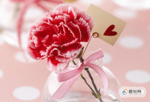 康乃馨花语是什么,母亲节送什么花最适合