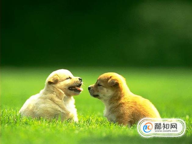如何辨别幼犬的公母