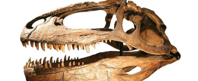 怎样才能复原远古动物?