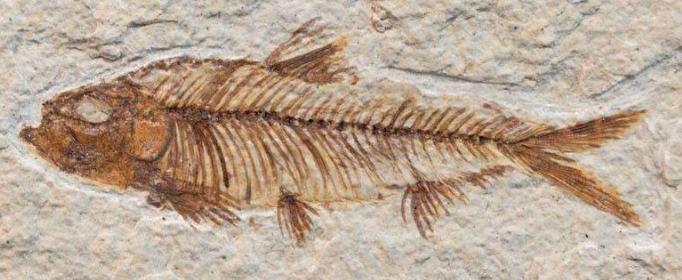 为什么可以根据地层和化石了解古气候的变化?