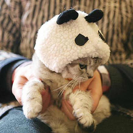 大熊猫是猫吗?
