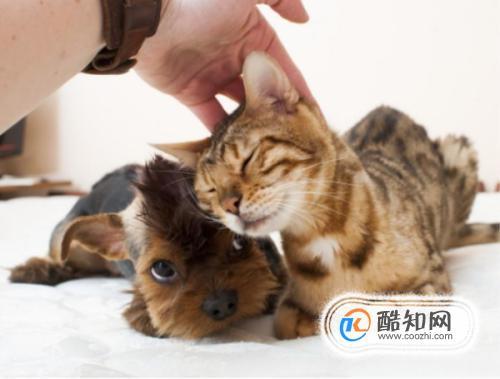 如何判断猫咪喜欢你?