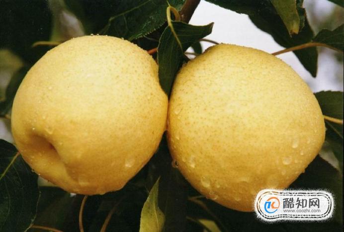 梨的營養價值及功效