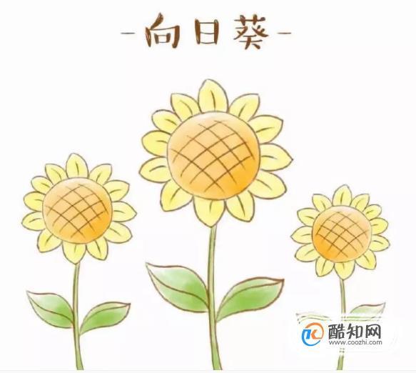 怎么畫向日葵簡筆畫