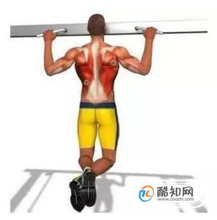 背部訓練 引體向上圖解