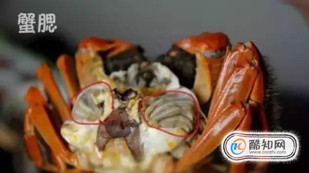 大闸蟹哪些部位不能吃?大闸?#26041;?#24524;