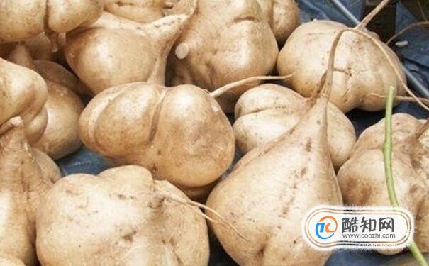 凉薯热量高吗 吃凉薯会胖吗