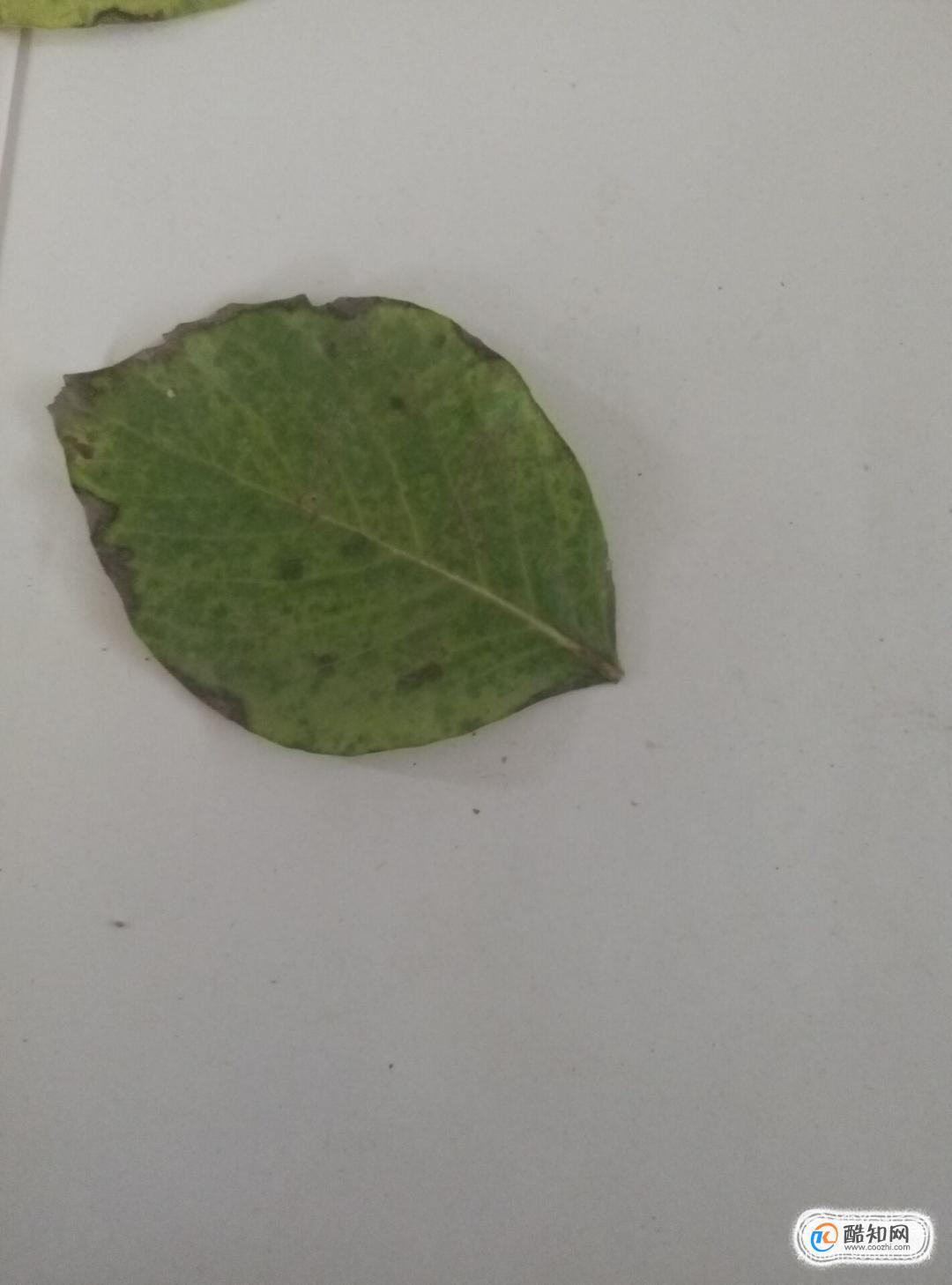 樹葉貼畫蝴蝶制作方法