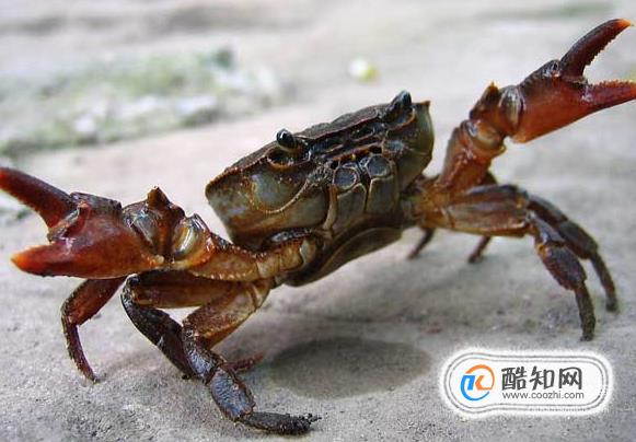 螃蟹死了还能吃吗