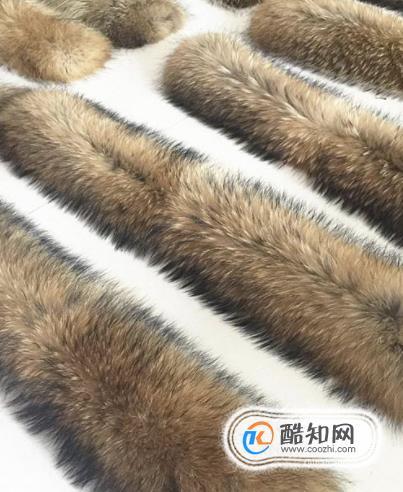 狐狸毛和貉子毛区别
