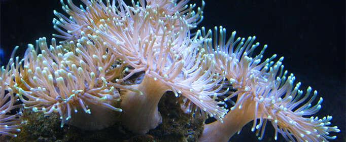 珊瑚为什么是动物而不是植物?