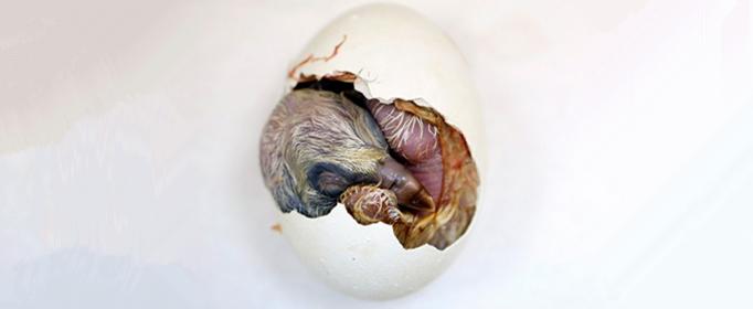 鳥蛋為什么會孵出小鳥?