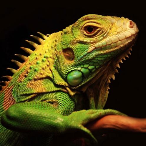 冷血动物的体温有什么特征?