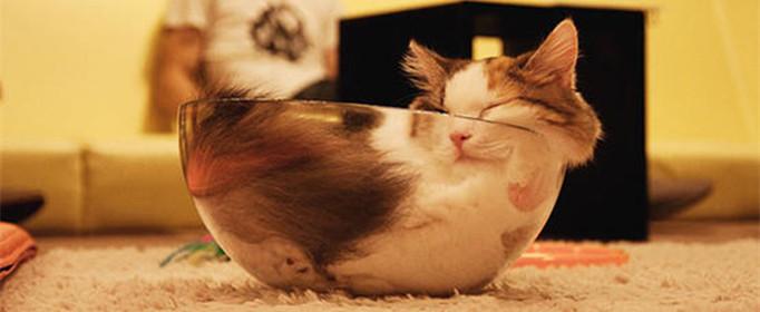 為什么貓咪能像液體一樣縮在小盒子里?
