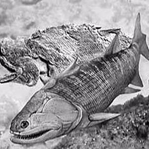 鱼类的祖先叫什么?