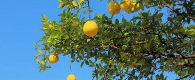 一年好景君须记最是橙黄橘绿时是什么意思?