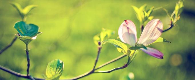 春捂秋凍指的是什么意思?