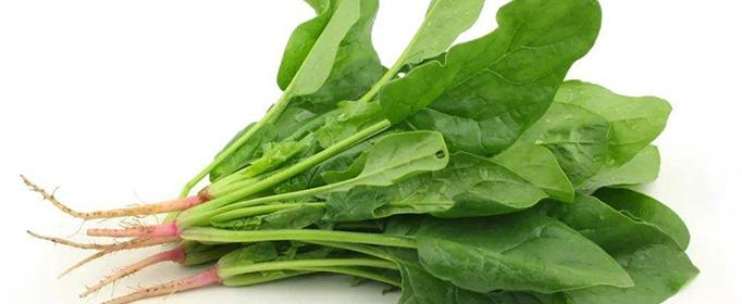 冬天種植什么蔬菜最好?