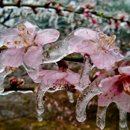 倒春寒一般是几月份?